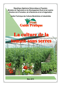 Guide pratique la culture de la tomate sous serres