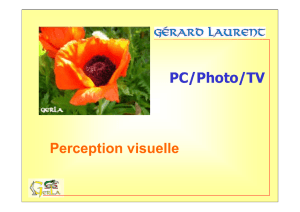 Perception visuelle