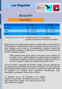 Les Ongulées Bouquetin - areeprotettevallesesia