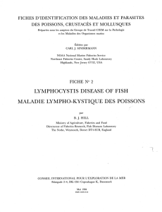 lymphocystis disease of fish maladie lympho-kystique des