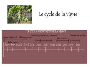 Le cycle de la vigne