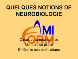 QUELQUES NOTIONS DE NEUROBIOLOGIE