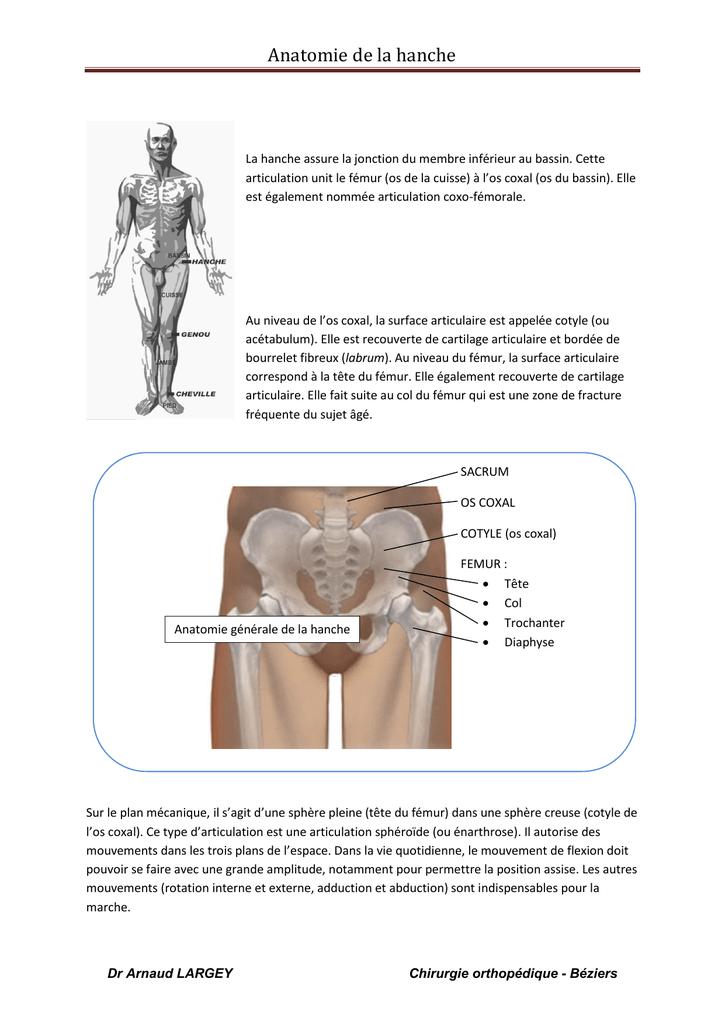 Charmant Femur Fakten Ideen - Menschliche Anatomie Bilder ...