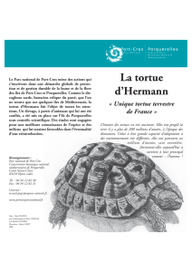 La tortue d`Hermann - Parc national de Port-Cros