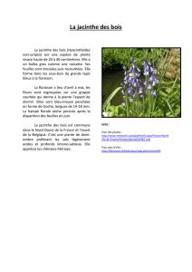 Amande Galles Euphorbe purpurea-Euphorbia amygdaloides