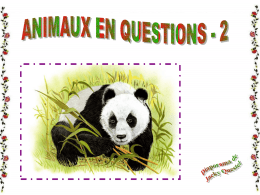 Animaux en question II