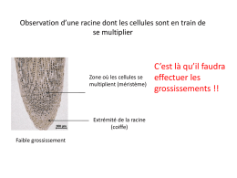 TH1-chap2_TP_observation_racines