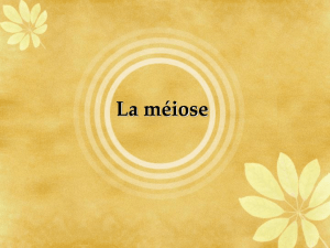 La méiose - Le Site Web de Jeff O`Keefe