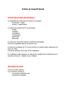 Description du massif facial