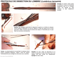 Protocole de dissection du Lombric (Lumbricus terrestris)