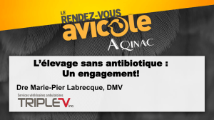 L`élevage sans antibiotique : Un engagement!