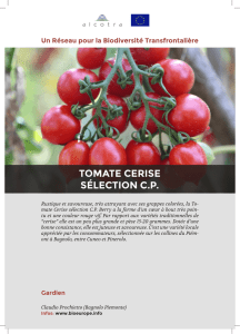 fiche-information-tomate-cerise-selection-cp