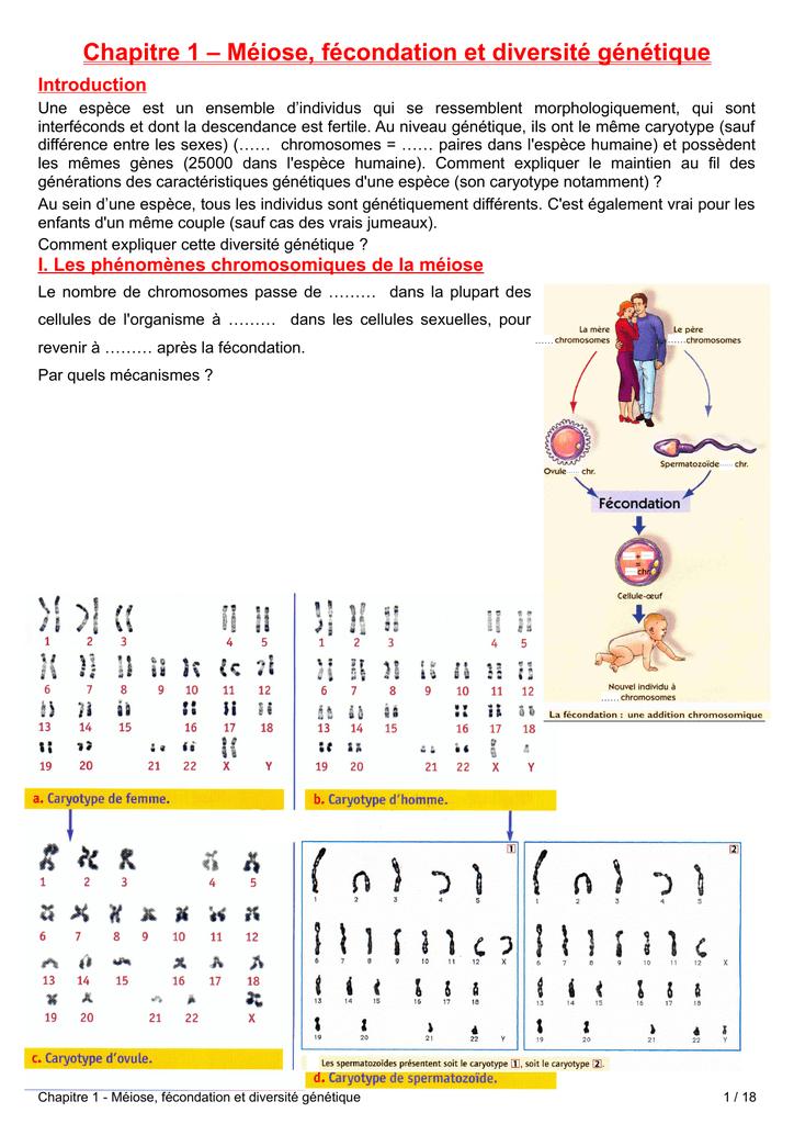 conséquences génétiques de la méiose