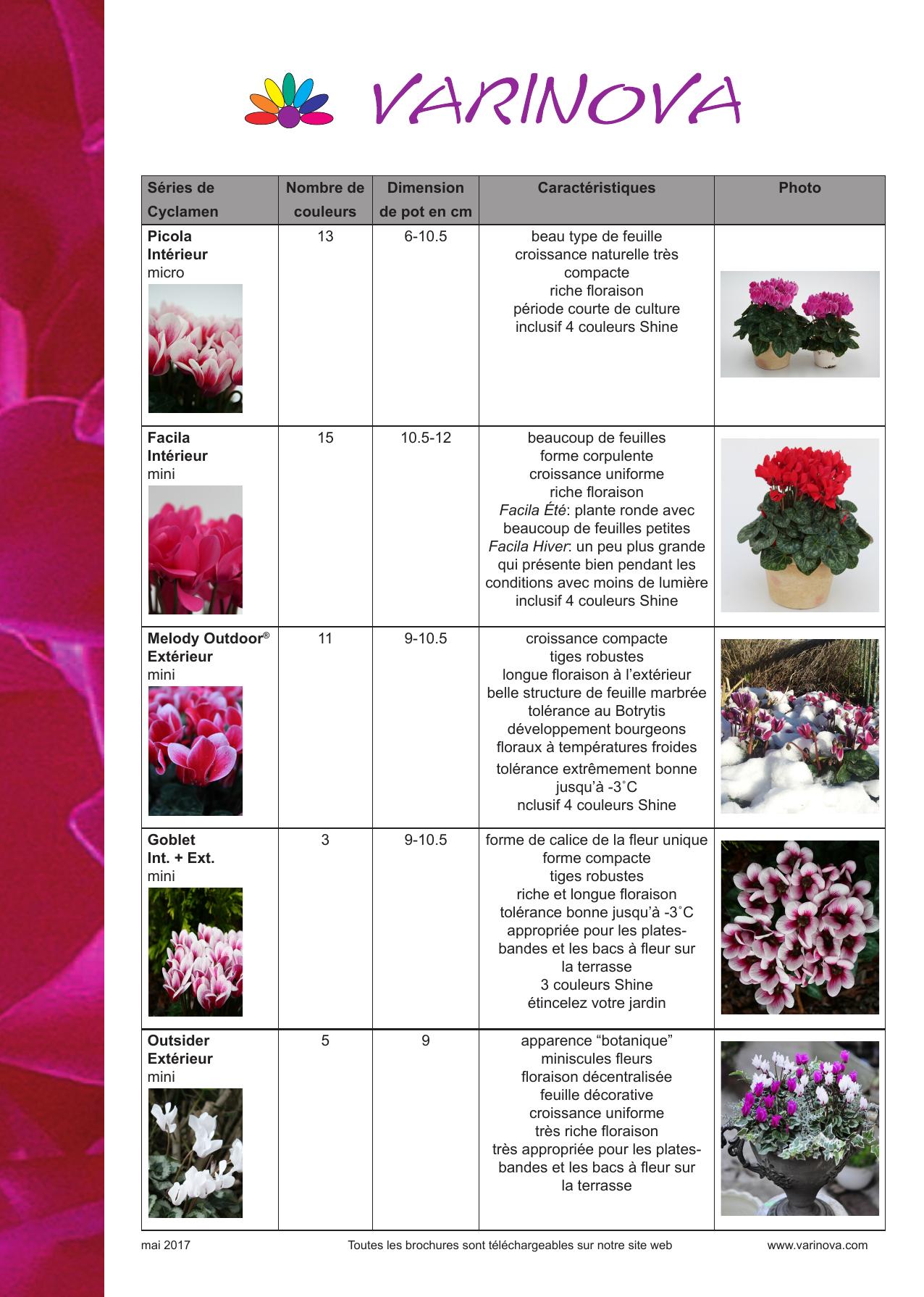 Plante Robuste Pour Terrasse séries de cyclamen nombre de couleurs dimension de pot en cm