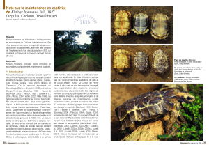 Kinixys homeana - Le Refuge des Tortues