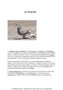 le pigeon - doc-developpement