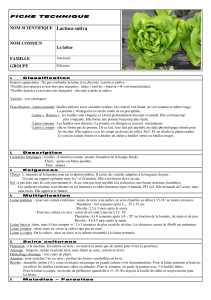 Lactuca sativa NOM SCIENTIFIQUE NOM COMMUN La laitue