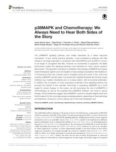 p38MAPK and Chemotherapy: We Always Need to Hear Both Sides of