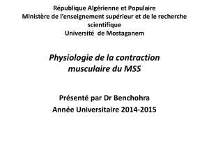 Contraction musculaire du MSS