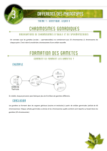 03 differenciation des phenotypes