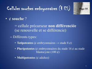 cours 11 cellules souches embryonnaires