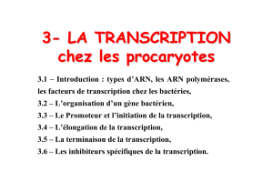Transcription.pdf
