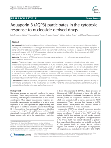 Aquaporin 3 (AQP3) participates in the cytotoxic response to nucleoside-derived drugs