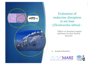 Evaluation of endocrine disruption in sea bass Dicentrarchus labrax