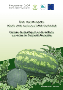 agriculture-durable-culture-pasteque- melon (2)