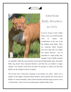 American Bully Breeders in USA