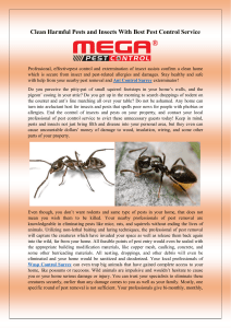 Clean Harmful Pests and Insects With Best Pest Control Service