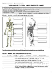 evaluation os muscles